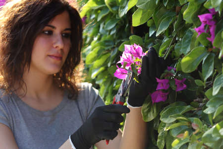 Beautiful gardener woman cutting flowers with secateurs with backlight photo