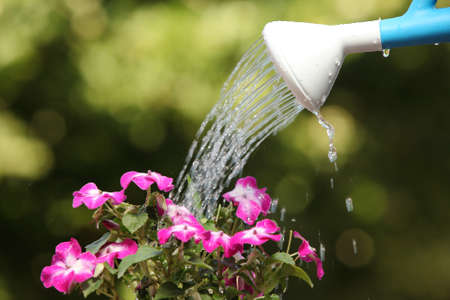 Water can watering a flower plant with a green unfocused background
