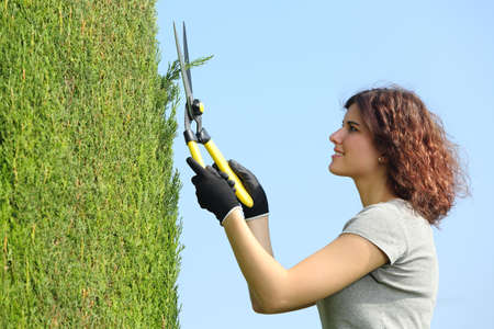 shears: Gardener woman pruning a cypress with pruning shears with the sky in the background Stock Photo