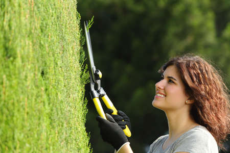 Close up of a gardener woman pruning a cypress with a pruning scissors, photo
