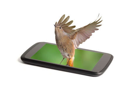 Close up of a smart phone screen alive with a bird flying from it isolated on white                   photo