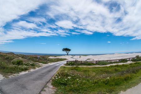 lone cypress at 17 miles drive, Monterey peninsula, california