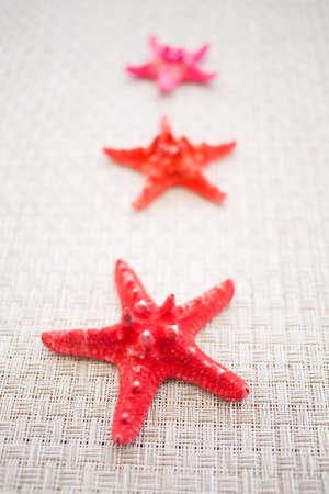 selective focus: red sea stars, selective focus Stock Photo