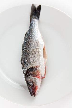 fresh seabass prepared baking photo