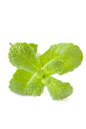 green mint leaf isolated on white background photo