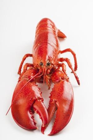 raw lobster: una langosta cruda aislado m�s de fondo blanco
