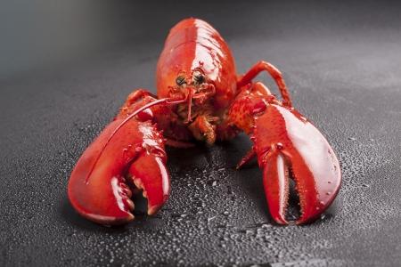 raw lobster: una langosta sin procesar aislado sobre fondo negro Foto de archivo
