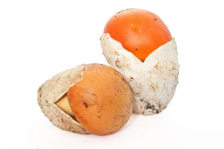two young Amanita Caesarea mushroom isolated on white background photo