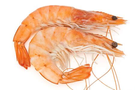 two fresh crayfish isolated on white background photo