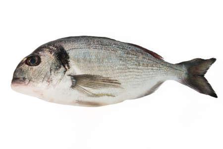 fresh sea bream isolated on white background Stock Photo - 6345244