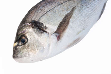 detail of sea bream fish isolated on white background Stock Photo - 6345250