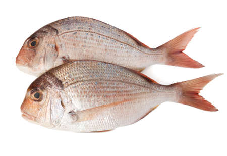 fish tail: fresh pink sea bream (pagellus) isolated on white background