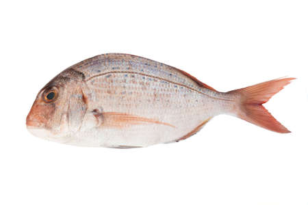 pink sea bream isolated on white background