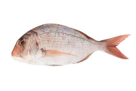 daurade: Rose mer daurade isol� sur fond blanc Banque d'images