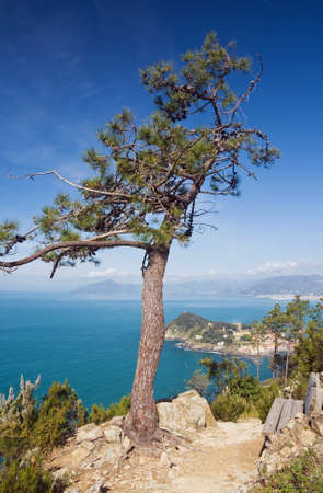 beautiful view of Tigullio Gulf and the town of Sestri Levante, Italy, with a pine overlooking the sea Stock Photo - 7081037