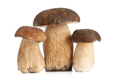 three Boletus Edulis mushroom isolated on white background