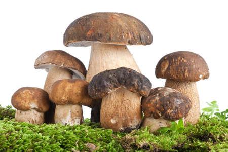 groep van Boletus Edulis paddestoel op mos geïsoleerd op witte achtergrond Stockfoto