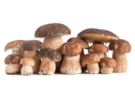 group of Boletus Edulis mushroom isolated on white background