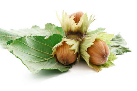 group of hazelnuts with leaves over white background Stock Photo