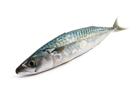 one fresh mackerel fish over white background Stock Photo