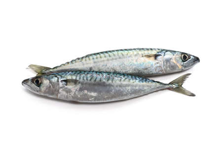 two fresh mackerel fish over white background Stock Photo - 11888706