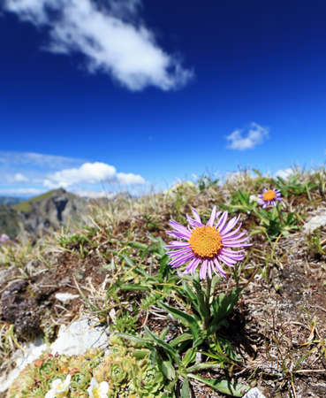 Alpine flora in Dolomites mountain on a sunny day photo