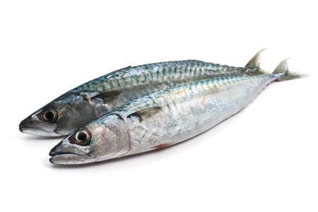 two fresh mackerel fish over white background