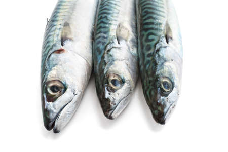 closeup of three fresh mackerel fish over white  Stock Photo - 12680898