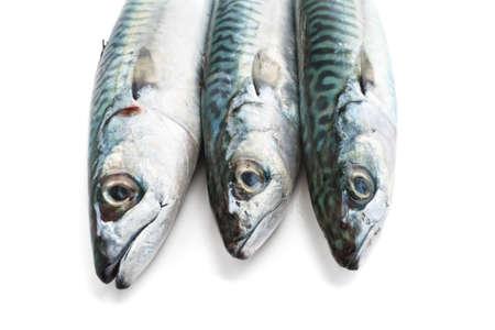 closeup of three fresh mackerel fish over white  Stock Photo