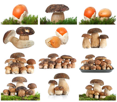 edulis: collection of edible mushrooms over white background