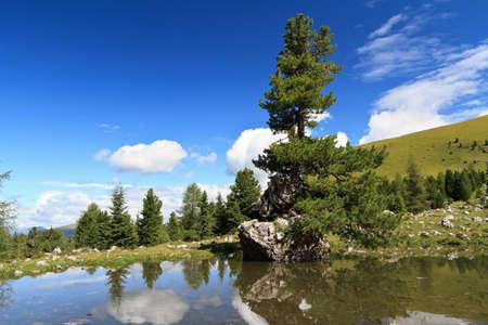 gardena: fir on a rock over the water in high Gardena valley, Italy Stock Photo