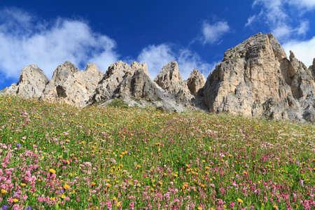 cir: wild flowers under Cir Dolomites, Gardena pass, Italy