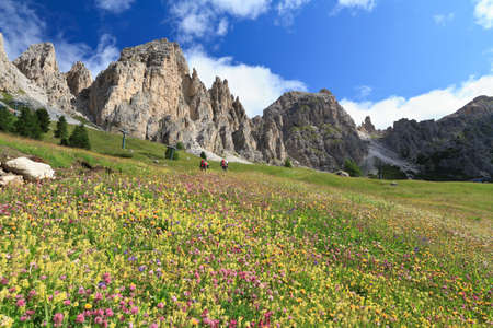 cir: flowered meadow and rocky mountain in Gardena pass, Italy Stock Photo