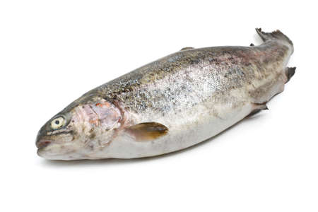 one fresh rainbow trout over white background Stock Photo - 16441889