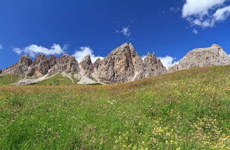 flowers and meadow beneath Cir Dolomites, Italy
