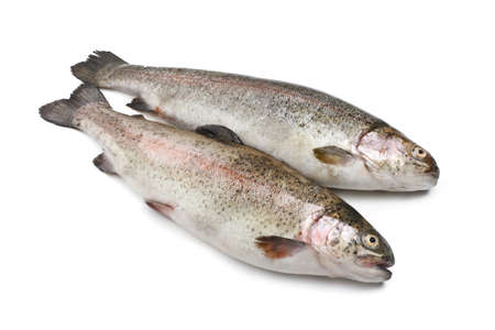 two fresh rainbow trout fish over white background photo