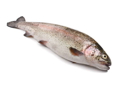 fresh rainbow trout fish over white background Stock Photo - 17441023