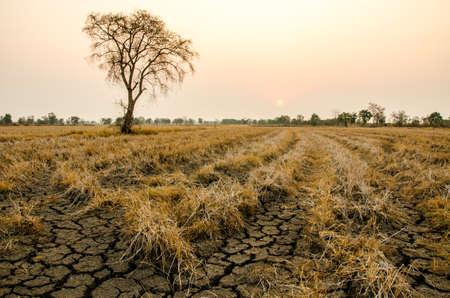 ground drought Reklamní fotografie