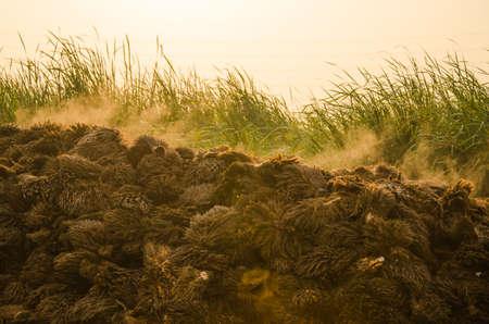leere Trauben der Ölpalmenfrucht, die zur Kompostierung oder als Energiequelle für Biomasse dienen