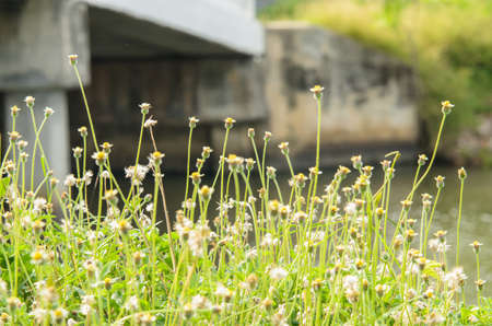 Flower grass next to the canal.