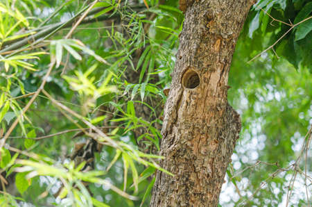 Hole on the tree is the birds habitat  in the forest far away from the city.