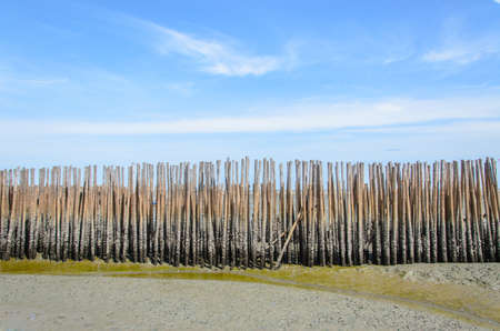 Wave protection is made of bamboo in the sea, while the water level is lowered to the ground on blue sky background.