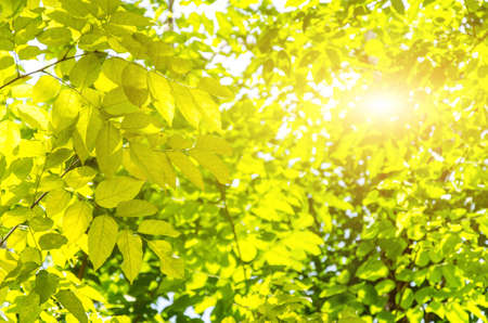 Look up view green leaves and sunlight through the trees. Stock Photo