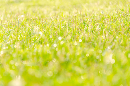 Abstract background with grass in the meadow with drops of dew in the morning.