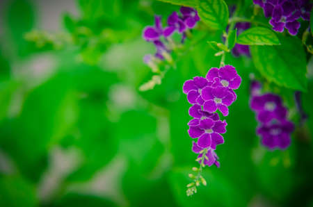 Small purple flowers with green leaves background.
