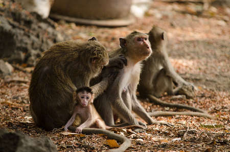 Monkey family with baby