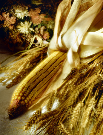 poetic: Corn Cob and Ears of Wheat with blur and poetic effect
