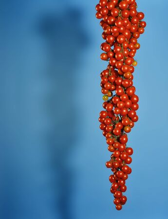 dangling: Big Bunch of Cherry Tomatoes dangling on blue Background