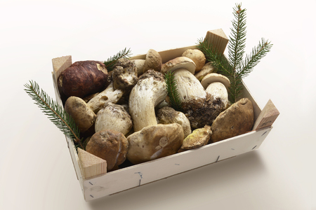 porcini: Isolated wooden box with natural Mushrooms Porcini
