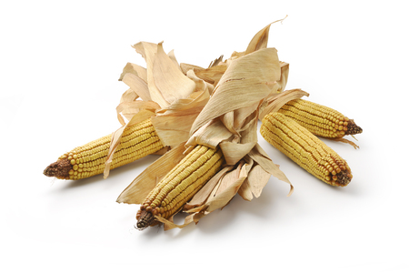 Four Mature maize ears isolated on white Stock Photo